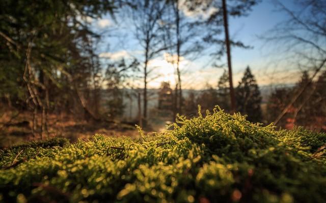 Ämnesbild Skog och biologisk mångfald